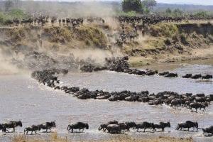 KENYA & TANZANIASerengeti-Migration